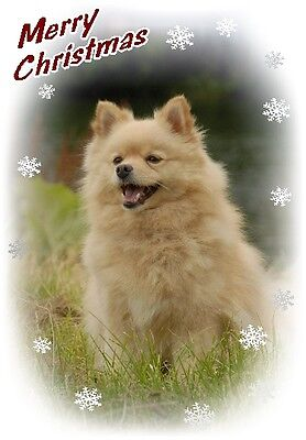 German Spitz Dog A6 Christmas Card Design XGERMSP-8 by paws2print