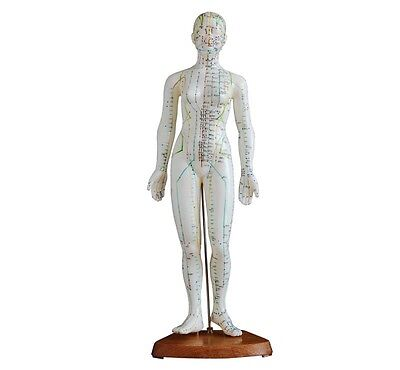 Acupuncture Model 48cm Female with Wooden Base - With English & Chinese Booklet