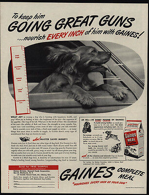 1947 Cute COCKER SPANIEL Puppy Rides In Car & Loves GAINES Dog Food VINTAGE AD