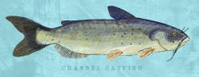 Channel Catfish by John W. Golden Animal Fish Print Poster 19x13