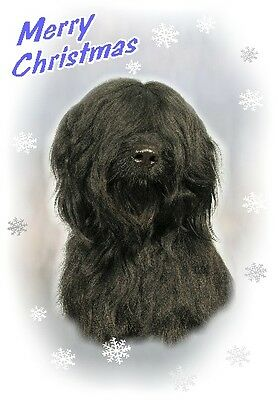 Briard Dog A6 Christmas Card Design XBRIARD-6 by paws2print
