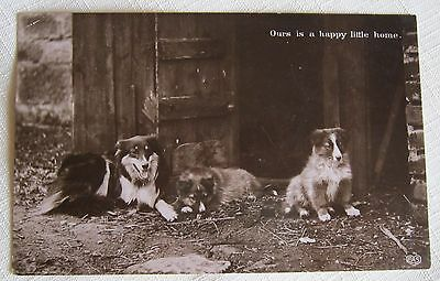 """DOG-Collie Dog With Her Puppies """"Ours Is a Happy Home"""" OLD POSTCARD-EAS 1911"""