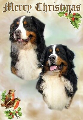 Bernese Mountain Dog A6 Christmas Card Design XBERNESE-4 by paws2print