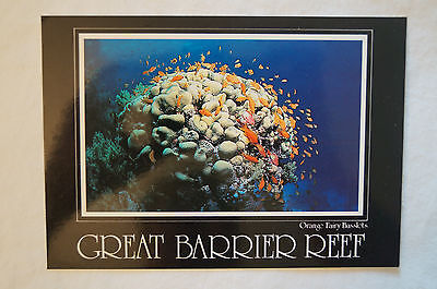 Great Barrier Reef - Collectable - Postcard.