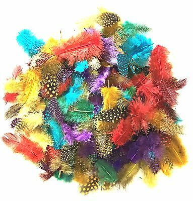 Feathers Spotted Craft Light Funky 7g Bright Colour Fly Fishing  Assorted Shapes