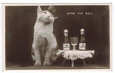 """Vintage Cat Postcard Kitten  RPPC Rotary """"After The Ball"""" Cat Hungover PM 1906"""