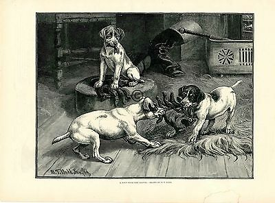 1885 Dogs Fight Over Gloves Print Tug of War S T Dadd A Greenaway