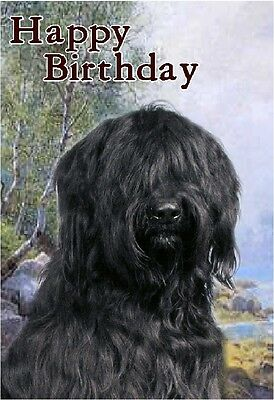 Briard Dog Design A6 Textured Birthday Card BDBRIARD-4 by paws2print