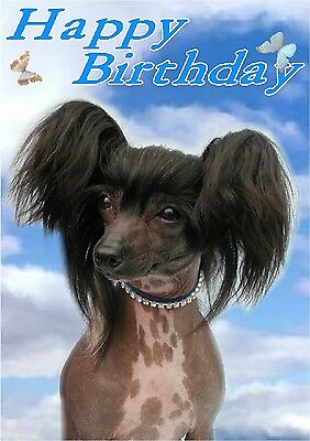 Chinese Crested Dog Design A6 Textured Birthday Card BDCHINESECRESTED-4