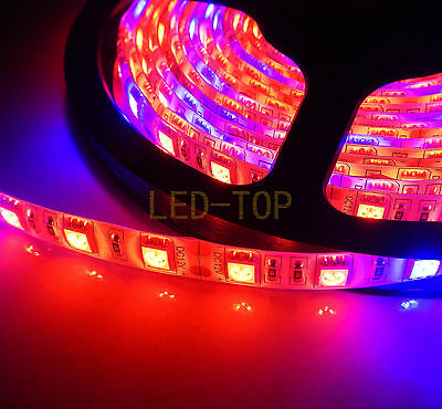 1M Plant Grow Light 5050 LED Strip Lamp Hydroponic RED BLUE 5:1 Waterproof DC12V