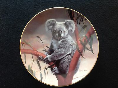 """""""The Koala"""" - 1st issue Nature's Lovables Collector Plate by Charles Frace ~1990"""