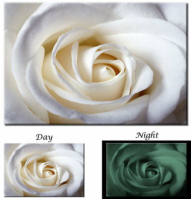 Glow in the Dark Canvas Art - White Rose Flower Blossom - Ready to Hang