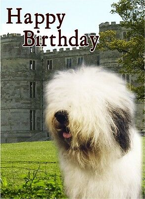 Old English Sheepdog Dog Design A6 Textured Birthday Card BDOES-2 by paws2print