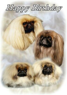 Pekingese Dog Design A6 Textured Birthday Card BDPEKE-4 by paws2print