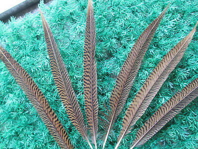 10-100 Pcs beautiful natural pheasant tail feathers 25-35 cm / 10-14 inches
