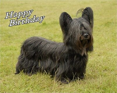 Skye Terrier Dog Design A6 Textured Birthday Card BDSKYE-2 paws2print