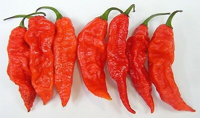 30 Bhut Jolokia Naga Guindilla Fantasma Semillas Seeds Chilli Peppers Ghost