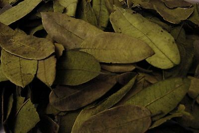 Guava Leaves Dried Natural Green - Potpourri Ingredients - Nature Crafts