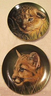 Lion and Cougar Cubs Collector's Plate by Qua
