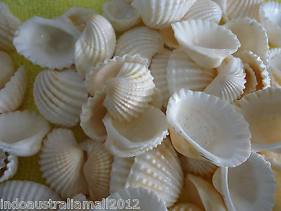 100 x Natural Sea Shell Beads Craft Sea Shells No Hole white (PTS058Y)