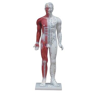 Acupuncture Model - Large Male 84cm Tall