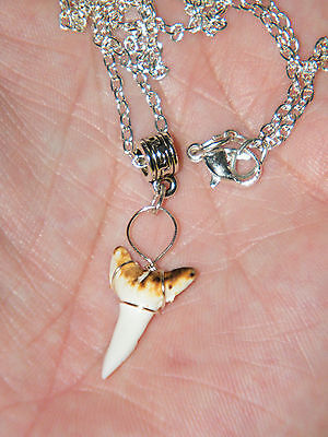 "LONG Shark Tooth Necklace Real SharkTeeth Choker 21"" Silver Plt Chain 2.5mm NEW!"