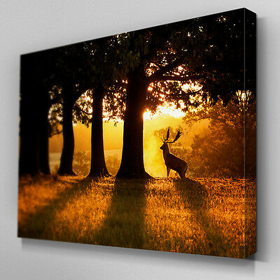 C340 Stag in Forest Clear Canvas Wall Art Ready to Hang Picture Print