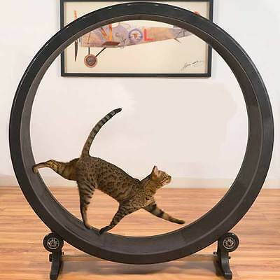 One Fast Cat Exercise Wheel Catch Play Toy Kitten Running Playing Treadmill NEW