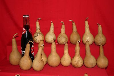 Gourds 15  Mini Dipper  Gourds ( Dried And Cleaned)