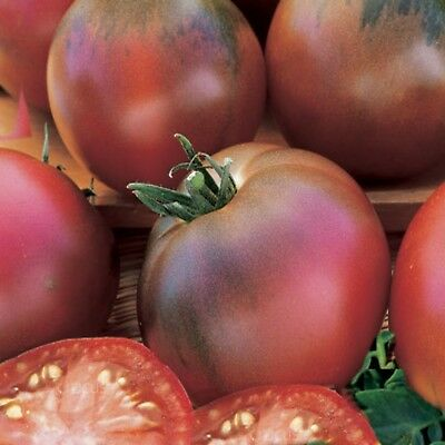 Tomato Black Russian  25 seeds heritage heirloom variety open pollinated NON GMO