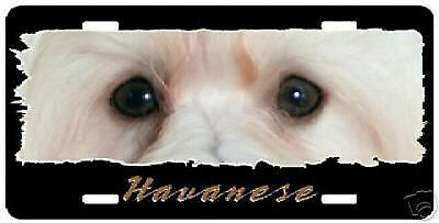 "Havanese # 4  "" The Eyes Have It ""  License Plate"