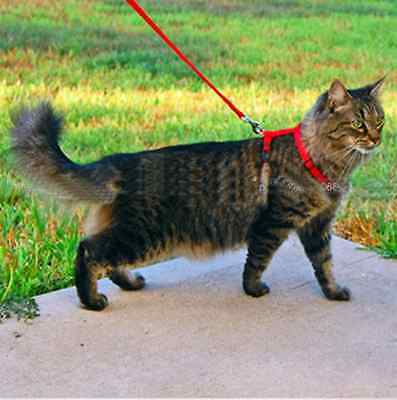 Cat Kitten Adjustable Harness And Lead / Leash Safety Harness