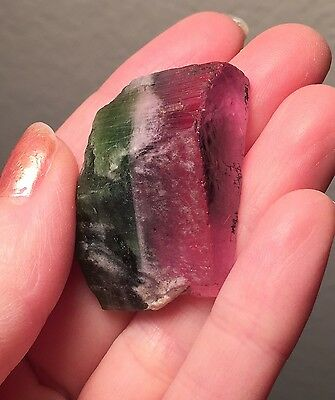 Large Gem Bi Color Watermelon Tourmaline Crystal ~ 108.9 Ct ~ Facet / cabochon
