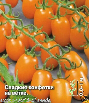 """Russian Cherry Tomato Seeds """"Honey Sweets"""" - Long Trusses With Orange Fruits New"""