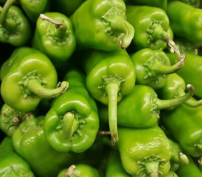 CHILLI PEPPPER ANAHEIM 50 seeds for your edible vegetable garden MILD Chili