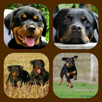 Rottweiler - Souvenir Novelty Coasters - Easy Clean - New - Gift/ Xmas / B/day