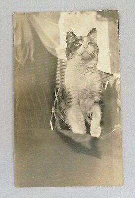 Vintage Unused Postcard - Black and White Photograph of Cat In Wicker Chair?