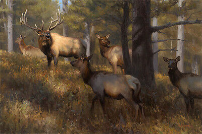 """""""In the Middle of Things"""" Kyle Sims Artist Proof 30"""" Giclee on Paper - Elk"""