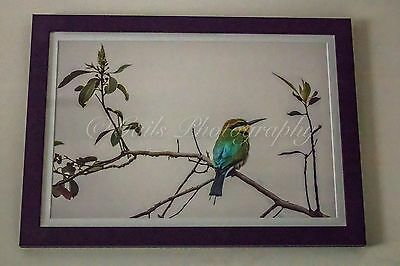 Decor Bird Fine Art Print 10x15inchGail's Photography+ Frame 'Simply Beautiful'