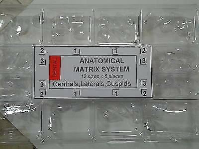 Dental Anatomical matrix Centrals Laterals Anterior Transparent Crowns 72pcs TOR