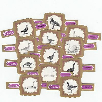 12 cigar bands Caraibe Geese And Swans purple