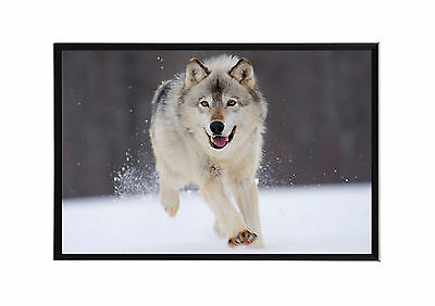 Cadre Photo A4 Noir/blanc.black/white Picture Frame.animaux Sauvage.loup-Wolf.