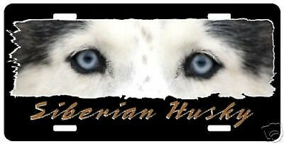 Siberian Husky    blue eyes    The Eyes Have It License Plate