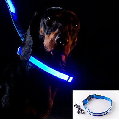 S-M-L-XL size BLUE USB rechargeable LED illuminated safety COLLAR for dogs