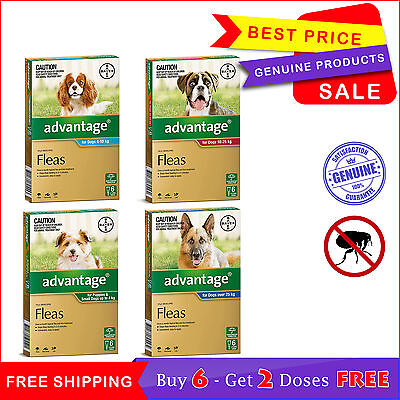 Advantage for Dogs Flea Treatment All Sizes 6 Pipettes + 2 FREE Pipettes