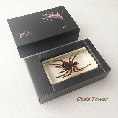 NEW Resin Huwena Spider Insect Specimen