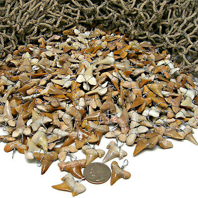 100 Pc Lots LG 7/8' + Grade 'A' Wire Wrapped Shark Tooth Pendants Sharks Teeth