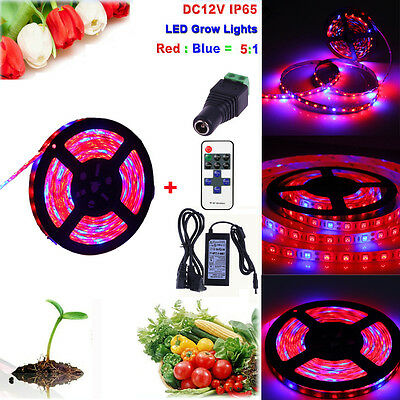 1M-5M 5050 LED Strip Grow Light Spectrum Aquarium Indoor Hydroponic Plant Lamp