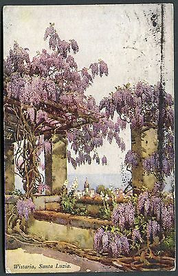 Posted 1954. Artist View of Wistaria in Bloom, Santa Luzia, Madeira