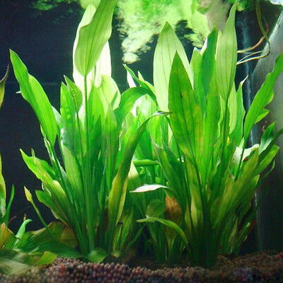 Fish Tank Aquarium Decor Green Artificial Plastic Water Grass Plant Ornament